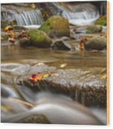 Roaring Fork Stream Great Smoky Mountains Wood Print