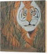 Roaring Tiger James Wood Print