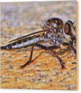 Robber Fly 001 Wood Print