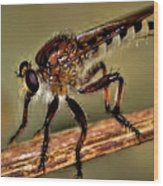 Robber Fly Wood Print