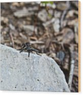 Robber Fly Sitting Wood Print