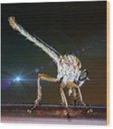 Robber Fly With It's Prey- Efferia Albibarbis Wood Print