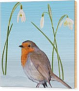 Robin And Cold Snowdrops Wood Print