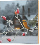 Robin And Rose Hips Wood Print