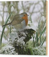 Robin And Snowdrops Wood Print