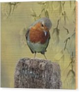 Robin Bird Wood Print