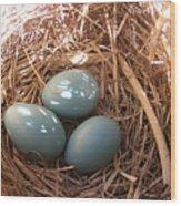 Robin Eggs Wood Print