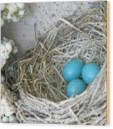 Robin Eggs In A Wreath Wood Print by Marqueta Graham