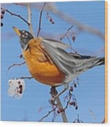 Robin Eying Berries Wood Print