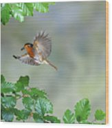 Robin Flying To Nest Wood Print