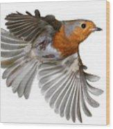 Robin In Flight Wood Print