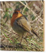 Robin In Hedgerow 2 Inch Donegal Wood Print