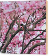 Robin In Magnolia Tree Wood Print