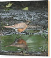 Robin In Reflection Wood Print