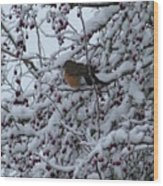 Robin In Snow Wood Print