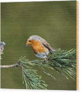 Robin In The Garden Wood Print