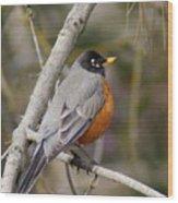 Robin In Tree 2 Wood Print