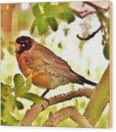 Robin In Tree Wood Print