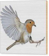 Robin Landing Wood Print