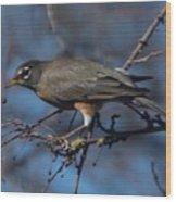 Robin Bird Wood Print