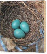 Robin Nest Wood Print