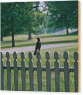 Robin On A Fence Wood Print