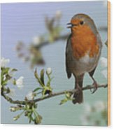 Robin On Cherry Blossom Wood Print