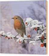 Robin On Cotoneaster With Snow Wood Print