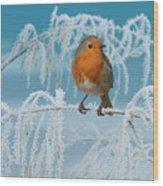 Robin On Frosty Grass Wood Print
