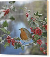 Robin On Holly Branch Wood Print