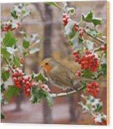 Robin On Holly Twigs Wood Print