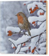 Robin On Snow-covered Rose Hips Wood Print