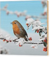 Robin On Snowy Cotoneaster Wood Print