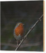 Robin On The Branch Wood Print