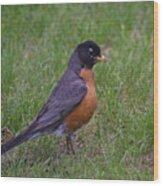 Robin On The Lawn Wood Print