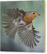 Robin On The Wing Wood Print