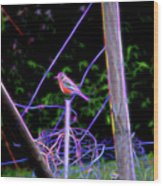 Robin On The Wires Wood Print