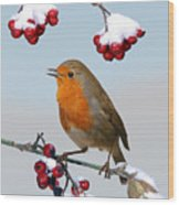 Robin On Winter Cotoneaster Wood Print