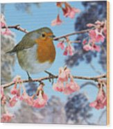 Robin On Winter Flowering Plum Wood Print