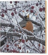Robin Perched In Crabapple Tree Wood Print