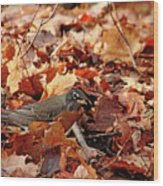 Robin Playing In Fallen Leaves Wood Print