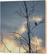Robin Watching Sunset After The Storm Wood Print