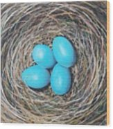 Robin's Eggs Wood Print