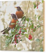Robins In Holly Wood Print