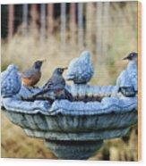 Robins On Birdbath Wood Print