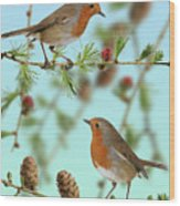 Robins On Larch Wood Print