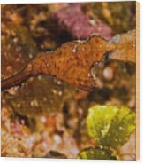 Robust Ghost Pipefish Wood Print