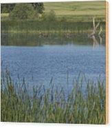 Rochester Wildlife Pond 1 Wood Print