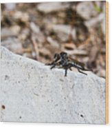Rock And Robber Fly Wood Print