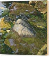 Rock Camo Wood Print